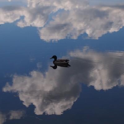 Parafrazując De Mono: Jak kaczki na niebie....