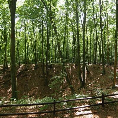 Rezerwat Bursztynowa Góra. Największy lej pozostały po odkrywkowej kopalni bursztynu.