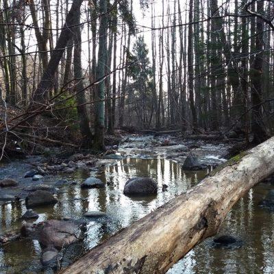 Rzeka Kacza tuż obok rez. Kacze Łęgi.