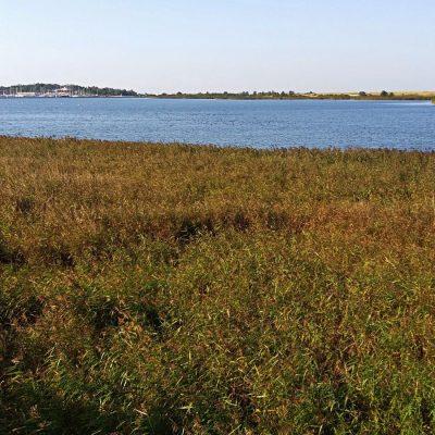 Widok z kolejnej platformy obserwacyjnej na jezioro Ptasi Raj