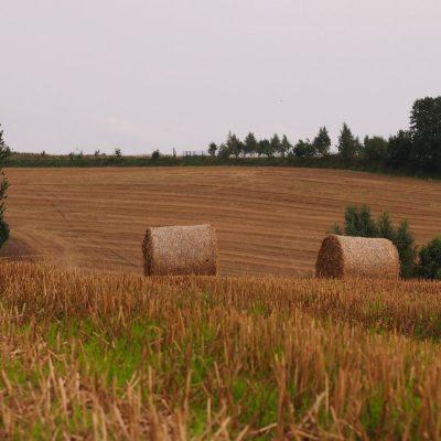 Krajobraz po sianokosach w okolicy Smoldzina